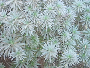 Would You Name This Plant Star Burst?
