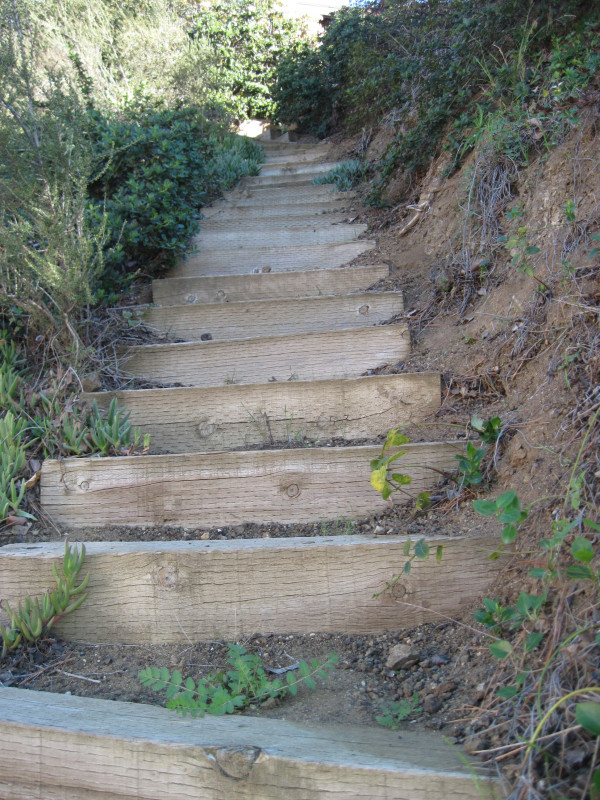 WALK WITH ME: Hollywood Hills