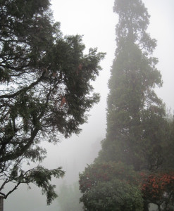 WALK WITH ME: Foggy Misty Rain