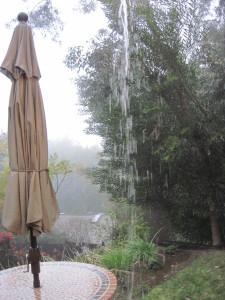 WALK WITH ME: Foggy Misty Rain